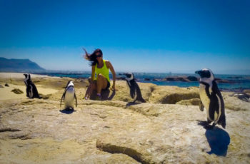 Boulders Beach, a Morada do Pinguim-Africano – Cape Town